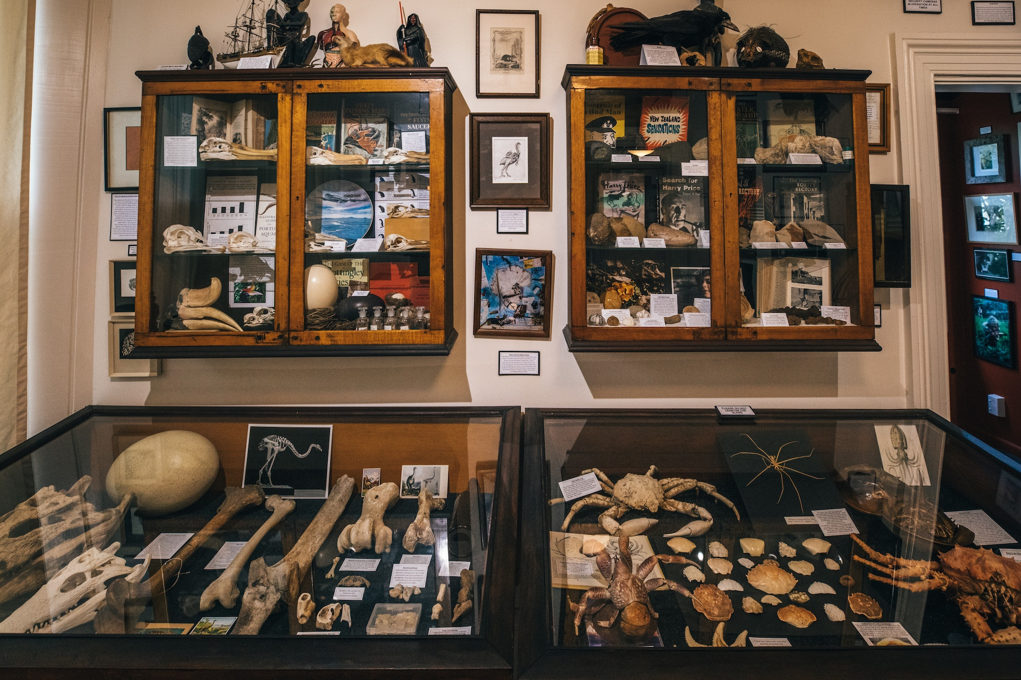 You are currently viewing New Zealand's quirkiest museum is full of mystery (and bones)
